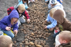 Potato_Days_-_website_4